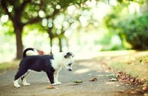 Je pup laten wennen aan nieuwe situaties is heel belangrijk