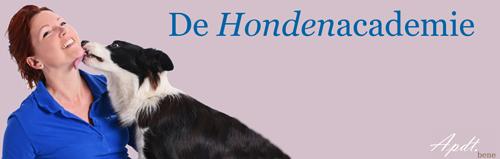 Hondenschool Boxtel / Waalwijk indoor hondentraining